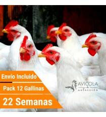 Oferta 12 Gallinas Leghor Portes Incluidos